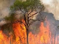 Reportan incendio  forestal en Madrid