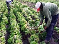 Más apoyo para el agro Cundinamarqués