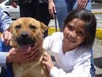 Jornada de adopción de perros y gatos en Bogotá