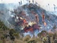 Incendio en San Mateo no afectó patrimonio arqueológico