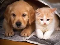 """Primera """"Semana Distrital de Protección Animal"""""""