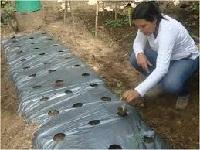 Destacan modelo de granjas autosostenibles en el Departamento
