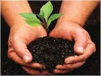 En Cajicá se sembrarán 8600 árboles