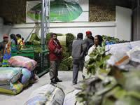 Vendedores de hoja de tamal son reubicados en plaza