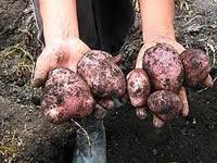Contemplan nuevo paro agrario para noviembre