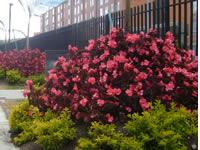 Residentes de Ciudad Verde recuperan jardines y zonas comunes