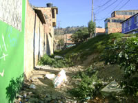 Abandono de terreno en San Mateo está a punto de generar problemas sanitarios