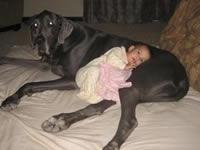 Muere el perro más grande del mundo