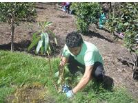 Siembra masiva de árboles en quebrada de Morací