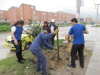 Arborización: muestra de conciencia y cultura ambiental en la comuna cinco