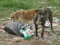 Proliferación de perros  en Sol de Portalegre