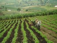 Cundinamarca construye pacto agrario