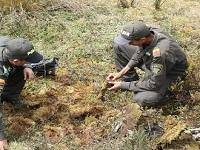 Siembran musgo en cerros orientales