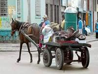 Vehículos de tracción animal serán decomisados