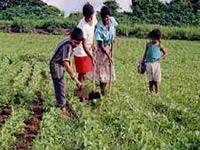 Cundinamarca reactiva sector agrícola damnificado