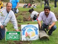 Continúa siembra de árboles en Cundinamarca