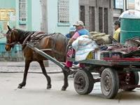 Se acaban 'las zorras' en Bogotá