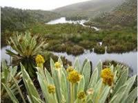 Cundinamarca perdería parte de  su reserva forestal