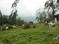 Fosca y Cáqueza fortalecen su  granja integral