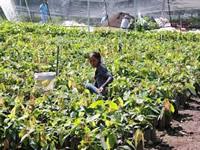 Millonaria inversión para distritos de riego en Cundinamarca