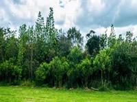 Bogotá recupera reserva forestal del norte