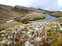 Bogotá eligió su tesoro natural