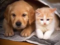 Inician campañas de esterilización canina y felina en Soacha