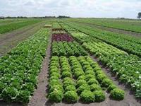 Soacha y Sibaté participarán en taller  agrícola