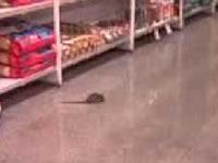 Supermercados capitalinos cuestionados por fallas en salubridad