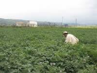 Nuevas oportunidades para el sector rural de Cundinamarca