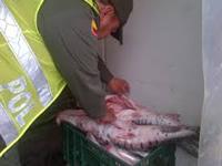 Empiezan los decomisos de pescado descompuesto