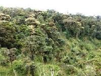 Cundinamarca busca recuperar su zona de bosque