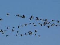 10 y 11 de mayo: Día Mundial de las Aves Migratorias