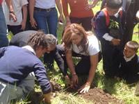 360 árboles sembró Beneficencia de Cundinamarca en Sibaté