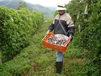 Nación aprueba  10 proyectos agropecuarios de Cundinamarca