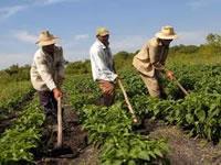 Llegan «oportunidades rurales» para el Departamento