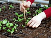 Convocatoria para presentar proyectos de horticultura