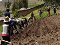 """Declarada """"exequible""""  ley  sustenta las zonas de reserva campesina"""