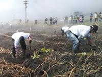 Con el Azadón de Oro, continúa la feria de Sibaté 2014