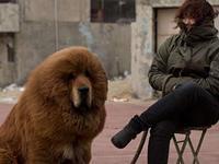 Abrirán hogar geriátrico para perros en Tokio