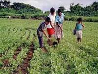 En riesgo, producción alimentaria del país