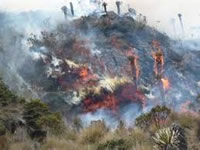Reportados 16 incendios forestales en Cundinamarca