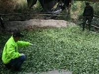 Desmantelado laboratorio artesanal de producción de coca