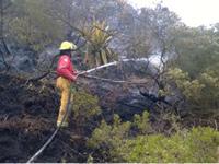 20 hectáreas consumió incendio en Canoas
