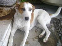 Se descarta cianuro en muerte masiva de perros en Soacha
