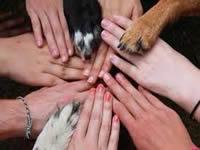 Faca consolida su junta defensora de animales