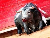 Plantean consulta popular para decidir eliminación de las corridas de toros
