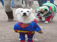 En la comuna cinco se efectuó la 5° jornada del festival canino y felino