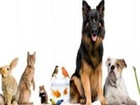 """Bogotá celebrará su segunda """"Semana Distrital de Protección Animal»"""