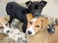 Próxima jornadas de esterilización canina y felina en Soacha